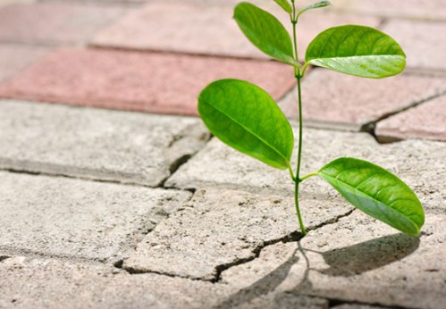 Growth in Adversity