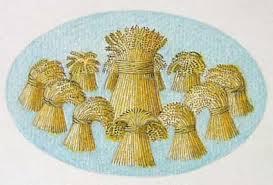 Joseph sheaves of wheat